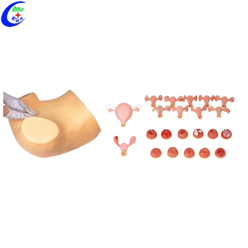 Advanced Gynecological Examination Simulator