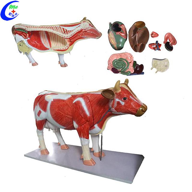Plastic Cow Anatomical Model