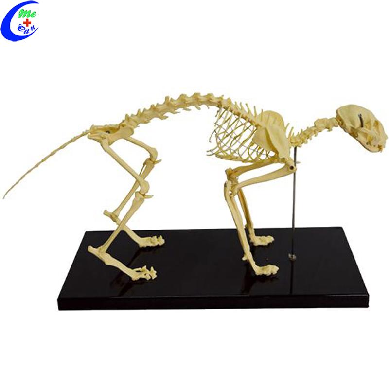 PVC Adult Cat Skeleton Model With All Bones