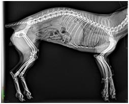 Portable X-ray Machine For Veterinary