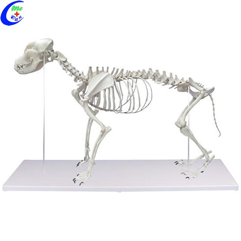 PVC Big Adult Dog Skeleton Model